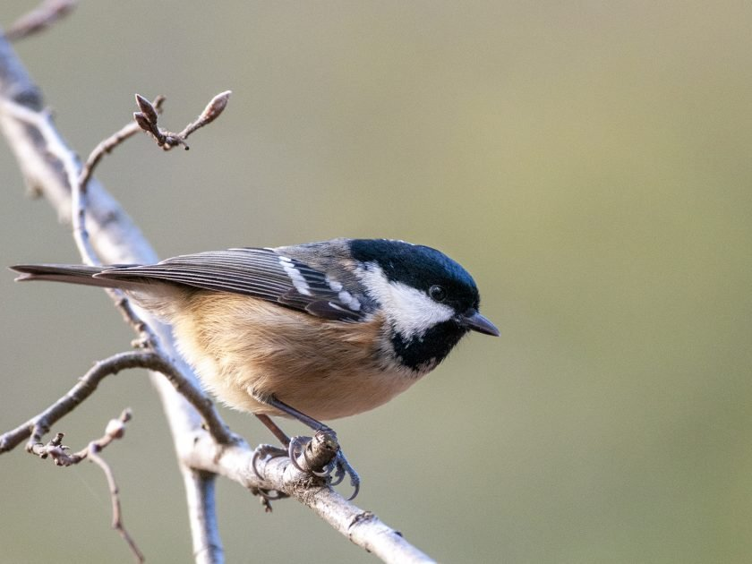 Great tit - woodland bird photography hide in Sussex by David Plummer
